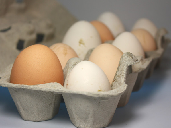 Eier von freilebenden Hühnern