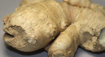 Ingwer – die gesunde Knolle