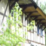 Wunderschönes Landhaus
